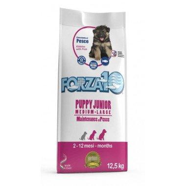 Gheda-Dog_Dog-wild-regional-forest-chien-adulte-2kg